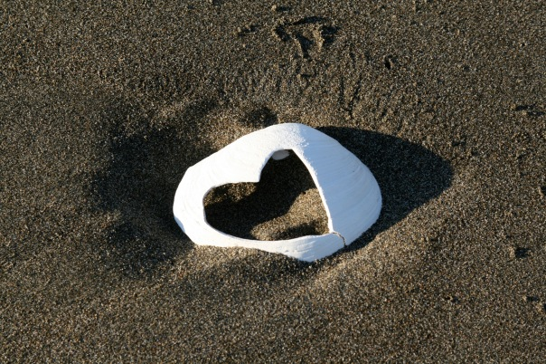 heart shell in the sand