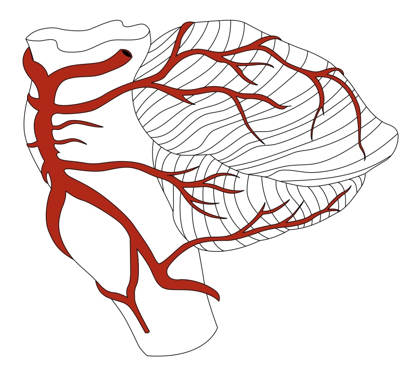 Lateral Cerebellar Blood